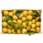 Limoni Biologici Bio di Calabria Cassetta Frutta Calabrese